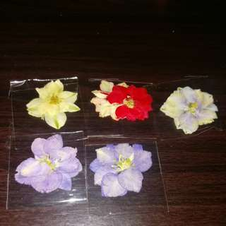 Per pack dry flower free postage