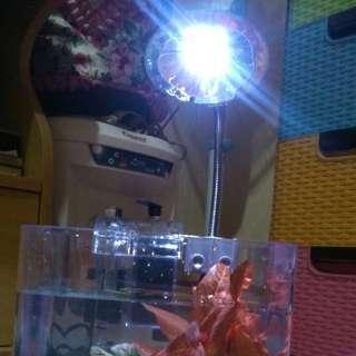 akuarium.mini bahan akrilic uk. 6.4 liter