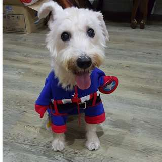 (INSTOCK) Pet Clothes (Mickey Mouse/ Minion/ Captain America)