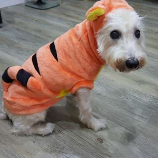 Instock TIGGER Pet Clothes