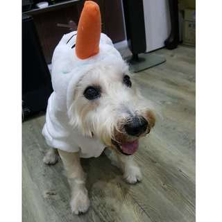 Instock OLAF Pet Clothes