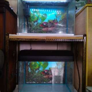 Two 2fts Fish Tanks with 3fts Wrought Iron Stand for Sale.