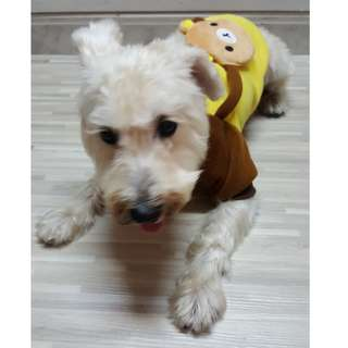 (Instock) Pet Clothes - Rilakkuma
