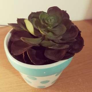 Fake Pot Plant