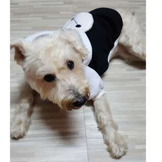 (Instock) Pet Clothes - Baymax
