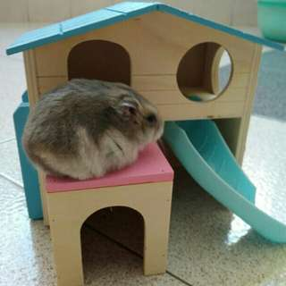 Wooden hamster house! Colorful