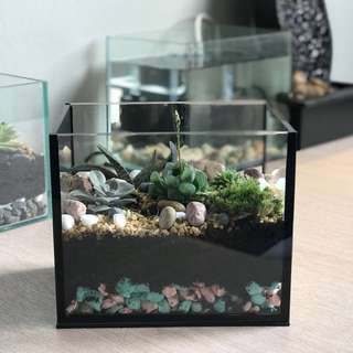 Terrariums & Mini Bonsai