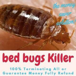 Bed Bugs Killer! Died U stubborn Bedbugs!