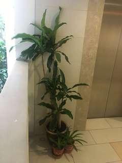 Beautiful tall ornamental plant