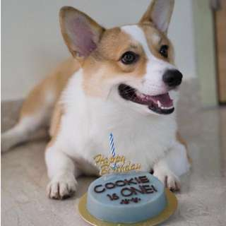Dog/Cat Birthday Cake