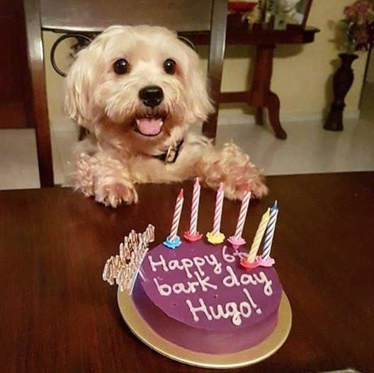 Dog Birthday Cake Pet Supplies On Carousell