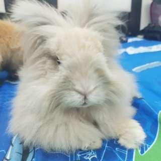 Rabbit baka