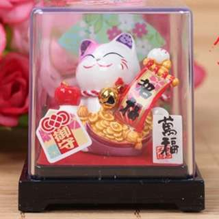 Fortune Cat in Show Case