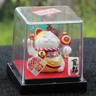 Fortune Cat in Show Case