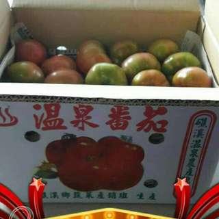 🚚 宜蘭溫泉蕃茄上市