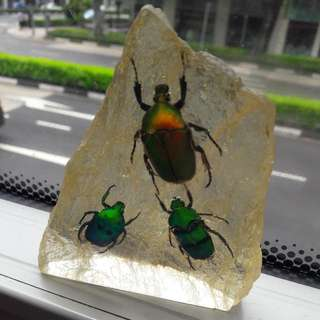 (Reserved)   Rare Beetles