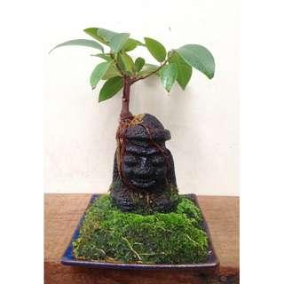 Zen  Bonsai  -  Dol  Hareubang  1