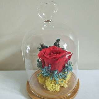 Red roses in glass jar