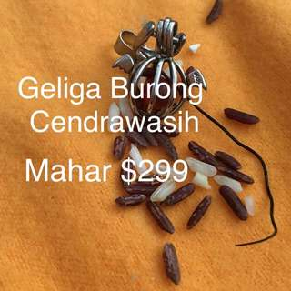 Geliga Burong Cendrawasih