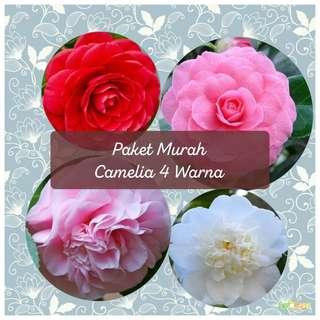Paket Murah Camellia 4 Warna
