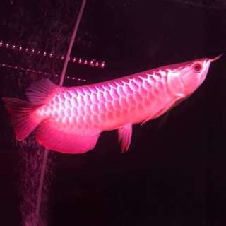 SALES!!! 4 COLOUR  Interchangeable Fish tank led light,  submersible c/w 1 month warranty!!! BRAND NEW!!!