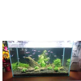 2 feet Aquarium fish tank - tank only or as a set