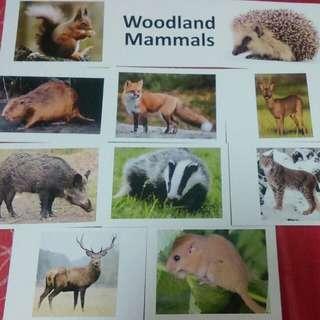 Diy encyclopedia flashcards - 6 topics