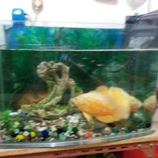 Fish tank with fish,養魚配件及魚四條