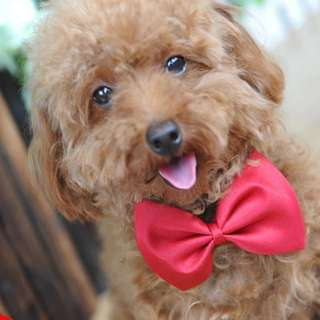 Cute red bow tie for cat or dog. Pet bow tie