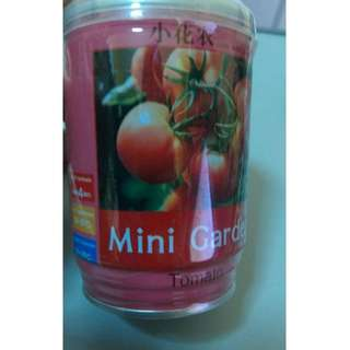 Mini Garden Tomato!! Grow plants in a can!