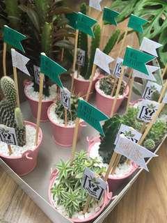 Cactus/Succulents in Mini Bucket