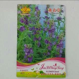 [Beli/Barter] Bibit Bunga Lavender