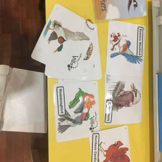 Pre-loved kindermusik feathers book and flashcards