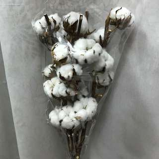 5 Stalks Of cotton flowers