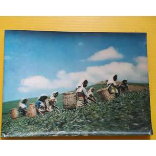 3 D ASSAM TEA PLUCKING POST CARD - india