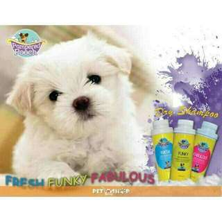 Pampered Pooch Dry Shampoo