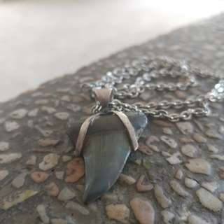 Fossil Shark tooth jewellery
