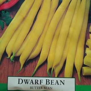 Aussie Dwarf Bean (Butter Bean) seeds