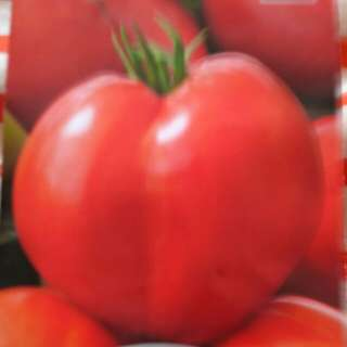 Oxheart Tomatoes Seeds