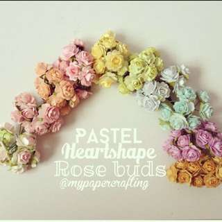 100 Mulberry pastel rose buds