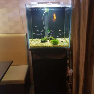Fish tank with cardinal tetra and eheim filter