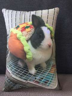 Customised ur pet photo into a cushion