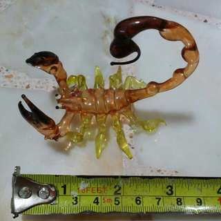 Blow Glass Yellow Desert Scorpion