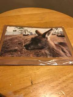 Photo card of Bonorong Wildlife Park Animal