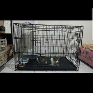 Kandang kucing / puppy (anak anjing)