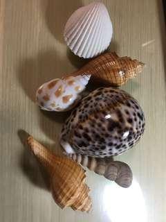 Beautiful shells on sell