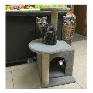 Cat House - 75cm