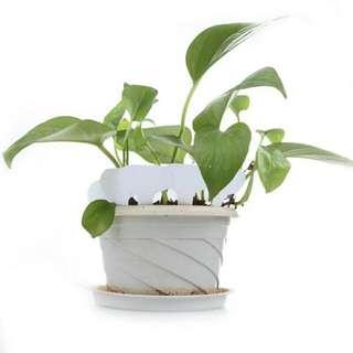100pcs/set T-type Plastic Nursery Garden Plant Label Thick Tag Mark for Flower Pot for Garden White