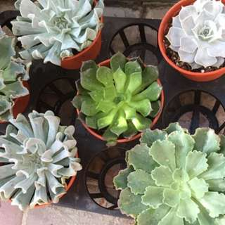 Succulents for sale!
