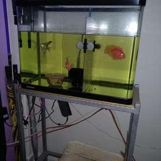 2 ft whole aquarium set
